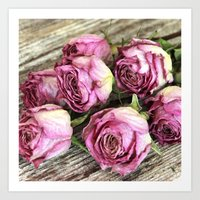 Dried Pink Roses Art Print