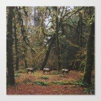Rainforest Elk Canvas Print