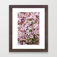 Apricot blossoms Framed Art Print