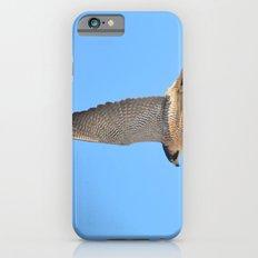 Peregrine Falcon Close Up 2 iPhone 6 Slim Case