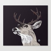 Deer (remindeer) Canvas Print