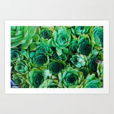 some kind of cactus 1 Art Print
