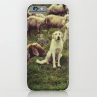 Herding dog, male, south of Israel, scaned sx-70 Polaroid iPhone 6 Slim Case