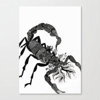 Scorpion  Canvas Print