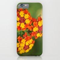 Italian Bloom iPhone 6 Slim Case