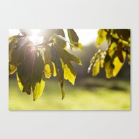leaves at sunset Canvas Print