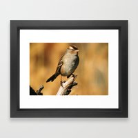 White-crowned Sparrow Framed Art Print