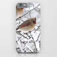 Female Cardinal iPhone 6 Slim Case
