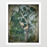 White Ibis Birds Roost Lake Waccamaw Green Swamp NC Art Print