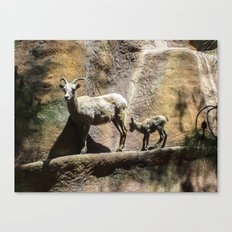 mama and its baby Canvas Print