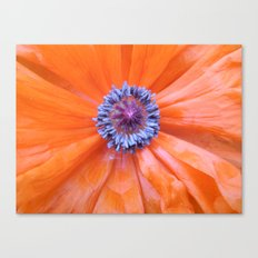Poppy 2 Canvas Print