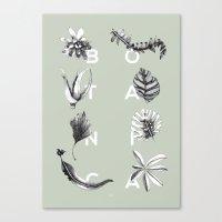 Botanica Letters | Pale Green Canvas Print