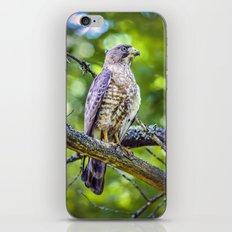 Broad wing Hawk iPhone & iPod Skin