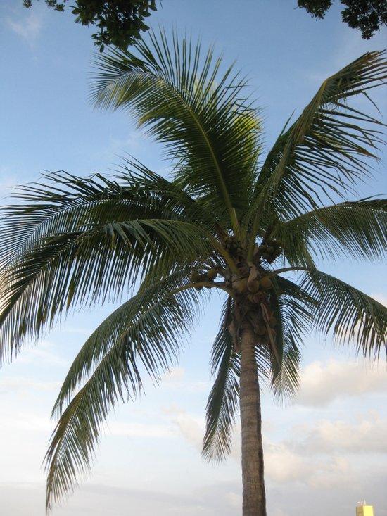 Jamaica - Royal Palms Art Print