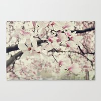 Magnolia. Canvas Print