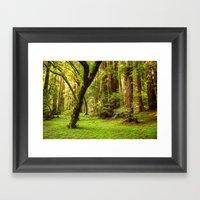 Muir Woods Framed Art Print