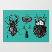Insects Canvas Print