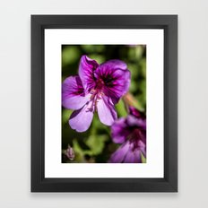 Purple and Pretty Framed Art Print