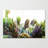 Tropical Colors Canvas Print