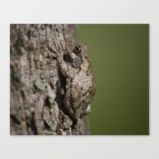 Gray Tree Frog Canvas Print