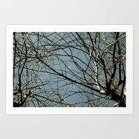 Entwined Art Print