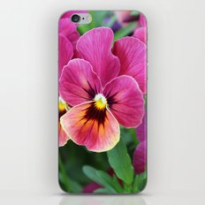 Pink Pansy Flower iPhone & iPod Skin