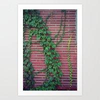 Brick Wall Ivy Art Print