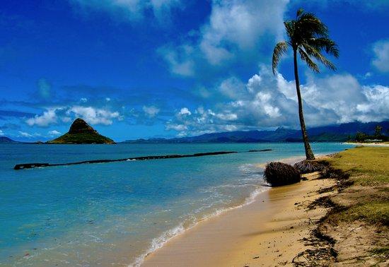 Hawaiian Dreams Art Print