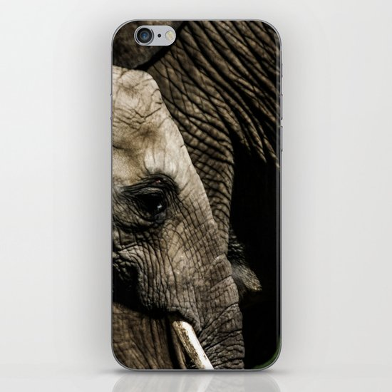 A baby elephant and his mother iPhone & iPod Skin