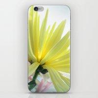 Yellow Petals iPhone & iPod Skin