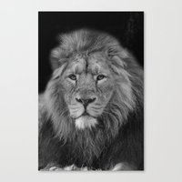 Asiatic Lion Canvas Print