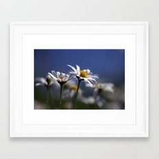 Daisies 3610 Framed Art Print