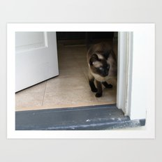 jaco cat Art Print
