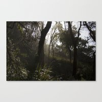 Light Forest Canvas Print