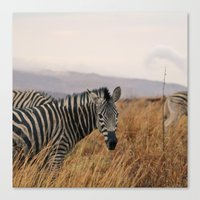 Black And White Stripes Canvas Print