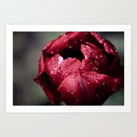Tulip Close Art Print