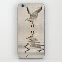 Black-headed Gull iPhone & iPod Skin