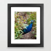 You Looking At Me? Framed Art Print