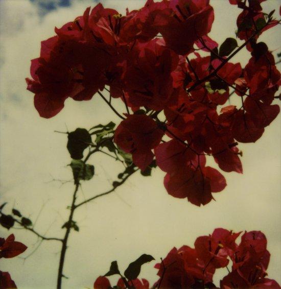 Floral Formula Polaroid Art Print
