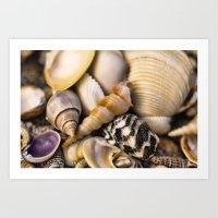Sea Shell Vision Art Print