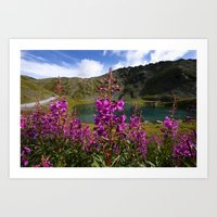 Fireweed - Hatcher Pass Alaska Art Print