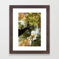 Fall Canopy - Woodland T… Framed Art Print