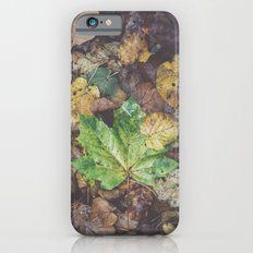 Hello Autumn Slim Case iPhone 6s
