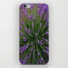 Lavender Field Of Dreams  iPhone & iPod Skin