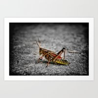 Grass Hopper.... Art Print