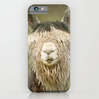 iPhone & iPod Case featuring Alpaca with a fringe..! by Pauline Fowler ( Polly470 )
