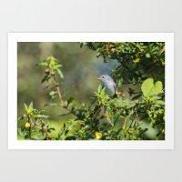 Blue-gray Gnatcatcher Art Print