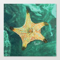 Starfish ~ 2 Canvas Print