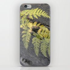 fern leaf XVI iPhone & iPod Skin