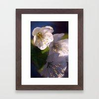 White Blossom Framed Art Print
